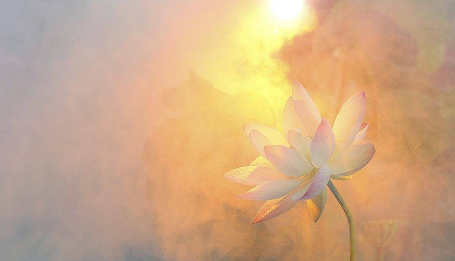 Instituto ESB - Curso de Aromaterapia Sagrada