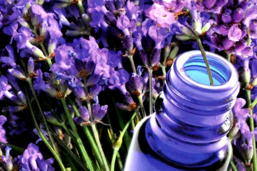 Instituto ESB - 10 Aceites Esenciales Básicos en Aromaterapia